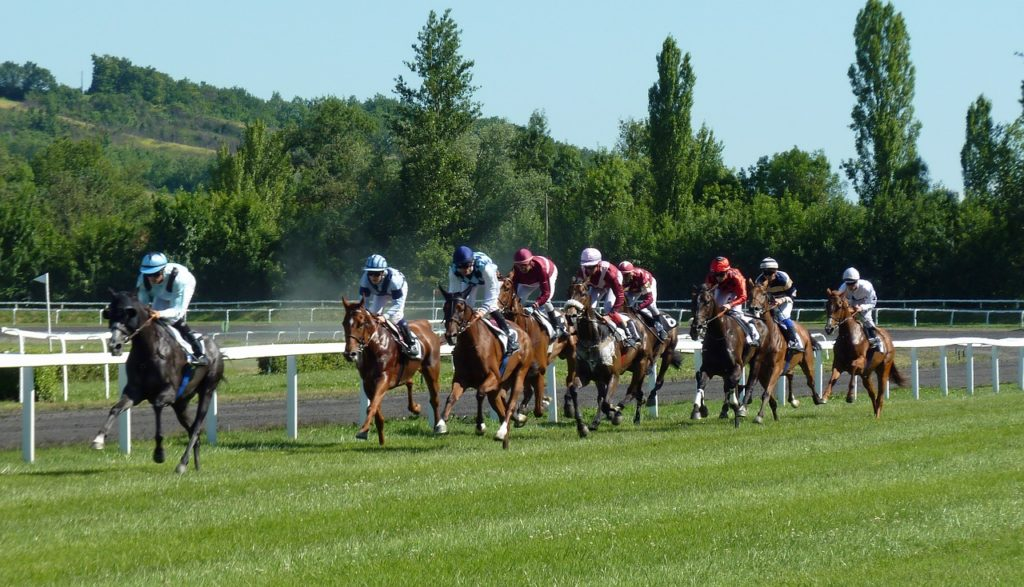 Disciplina turf o carrera de caballos