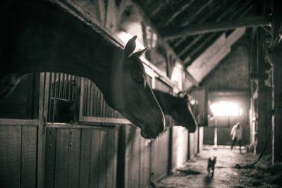 Establo con cabeza de caballo a contraluz