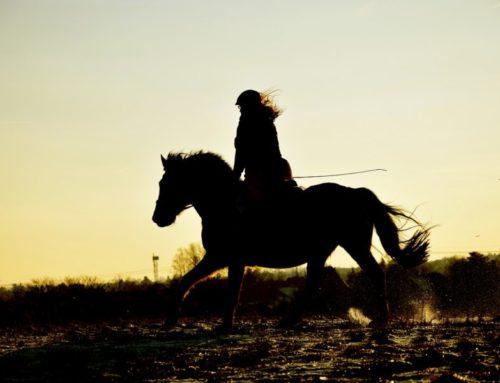 Conceptos en equitación