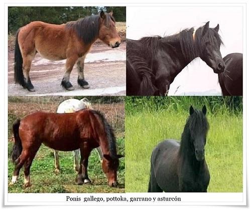 Razas autóctonas de ponis españoles