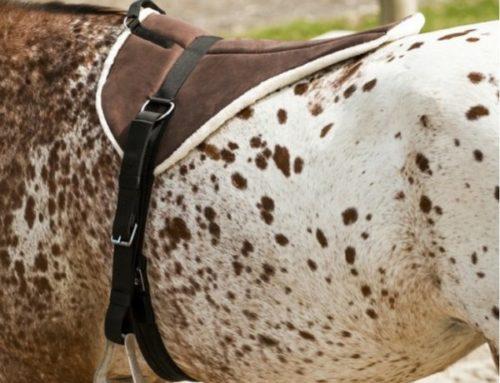 ¿Qué silla de montar a caballo comprar?