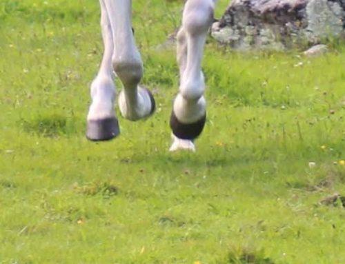 ¿Qué es barefoot en caballos?
