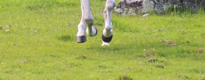 cascos de caballo sin herrar