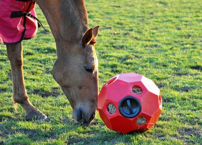 Bola dispensadora de heno para caballos