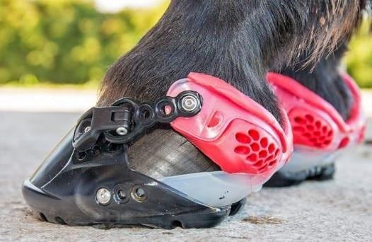zapatos para caballos