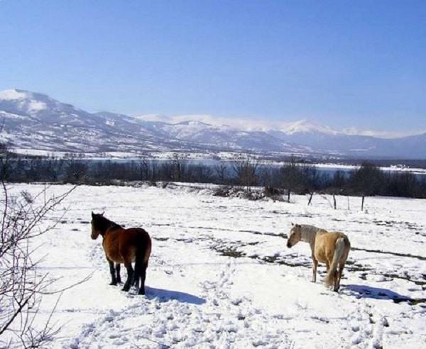 Dos caballos castaño e isabela en la nieve