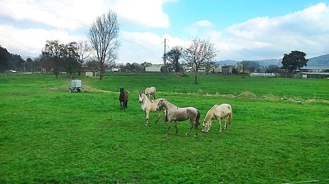 caballos de diferentes colores en un prado