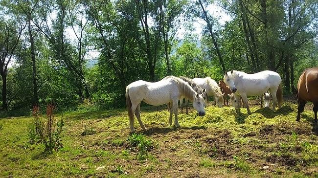 caballos de varios colores en un prado