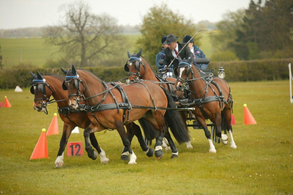 Disciplina de enganches de caballos