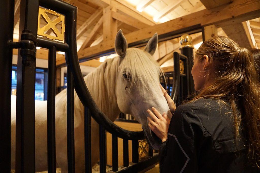 Chica atiende caballo en el establo