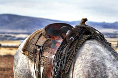 Montura western caballo ruano